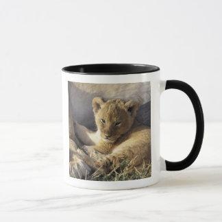Kenya, Masai Mara. Six week old Lion cub Mug