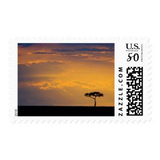 Kenya, Masai Mara. Sunrise silhouettes small Postage