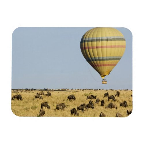 Kenya Masai Mara Tourists ride hot air balloon Magnet