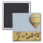 Kenya, Masai Mara. Tourists ride hot air balloon Magnet