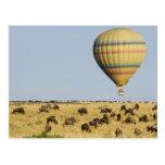 Kenya, Masai Mara. Tourists ride hot air balloon Postcard