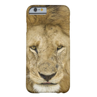 Kenya, Masai Mara. Two lions resting face to Barely There iPhone 6 Case