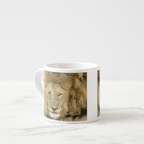 Kenya Masai Mara Two lions resting face to Espresso Cup