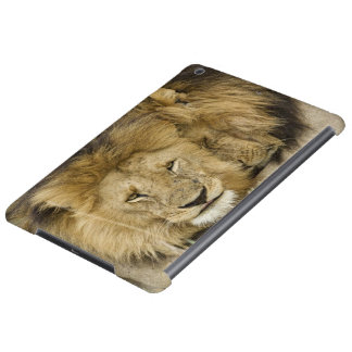 Kenya, Masai Mara. Two lions resting face to iPad Air Cases