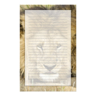 Kenya, Masai Mara. Two lions resting face to Stationery