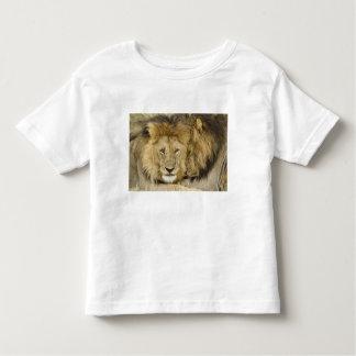 Kenya, Masai Mara. Two lions resting face to Toddler T-shirt