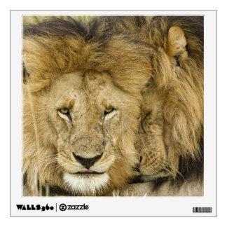 Kenya, Masai Mara. Two lions resting face to Wall Sticker