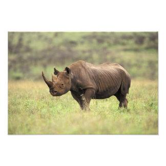 Kenya, Nairobi National Park. Black Rhinoceros Photo Print