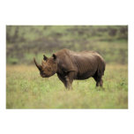 Kenya, Nairobi National Park. Black Rhinoceros Poster