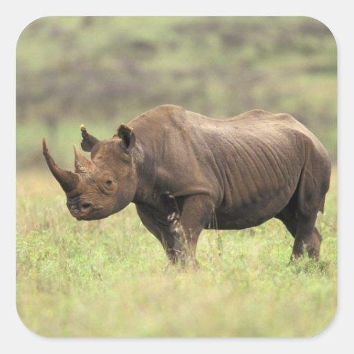 Kenya, Nairobi National Park. Black Rhinoceros Square Stickers