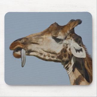 Kenya, Nakuru National Park. Rothschild's Mouse Pad