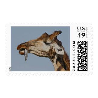 Kenya, Nakuru National Park. Rothschild's Postage