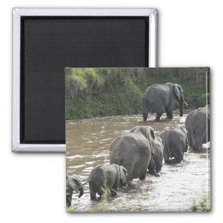 Kenya, No Water No Life Mara River Expedition, 2 Magnet