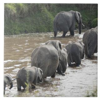 Kenya, No Water No Life Mara River Expedition, 2 Tile