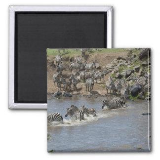 Kenya, No Water No Life Mara River Expedition, 3 2 Inch Square Magnet