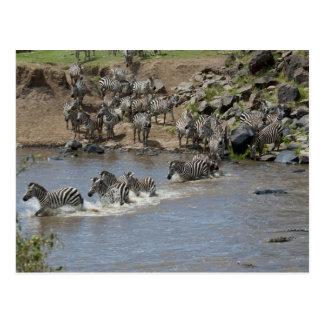 Kenya, No Water No Life Mara River Expedition, 3 Postcard