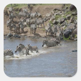 Kenya, No Water No Life Mara River Expedition, 3 Square Sticker