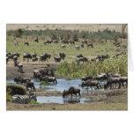 Kenya, No Water No Life Mara River Expedition, 4 Greeting Cards