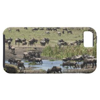 Kenya, No Water No Life Mara River Expedition, 4 iPhone SE/5/5s Case