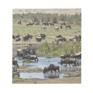Kenya, No Water No Life Mara River Expedition, 4 Memo Note Pad