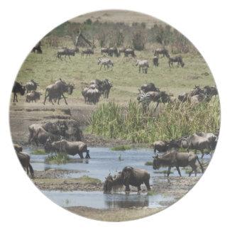 Kenya, No Water No Life Mara River Expedition, 4 Plates