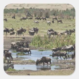 Kenya, No Water No Life Mara River Expedition, 4 Square Sticker