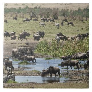Kenya, No Water No Life Mara River Expedition, 4 Tile