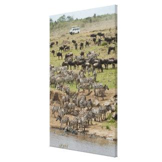 Kenya, No Water No Life Mara River Expedition, 5 Canvas Print