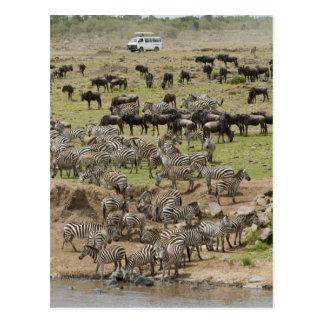 Kenya, No Water No Life Mara River Expedition, 5 Postcard