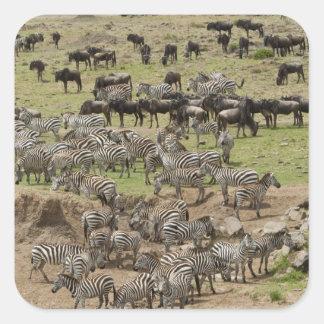 Kenya, No Water No Life Mara River Expedition, 5 Square Sticker