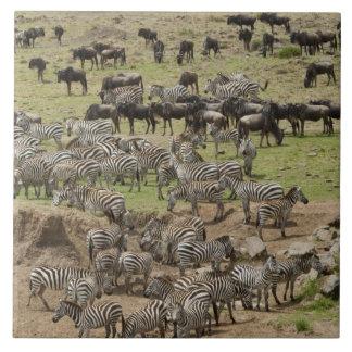 Kenya, No Water No Life Mara River Expedition, 5 Tile