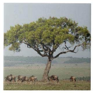 Kenya, No Water No Life Mara River Expedition, Ceramic Tile
