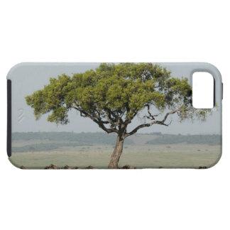Kenya, No Water No Life Mara River Expedition, iPhone SE/5/5s Case