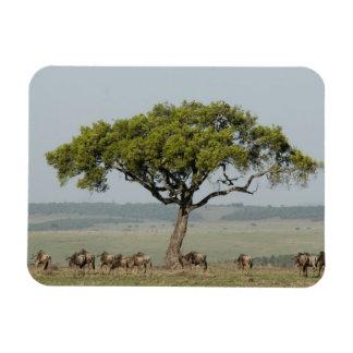 Kenya, No Water No Life Mara River Expedition, Magnet