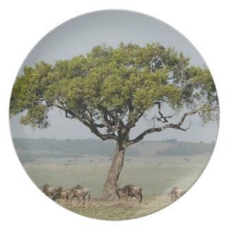 Kenya, No Water No Life Mara River Expedition, Melamine Plate