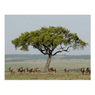 Kenya, No Water No Life Mara River Expedition, Postcard