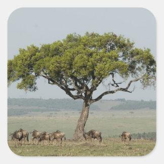 Kenya, No Water No Life Mara River Expedition, Square Sticker