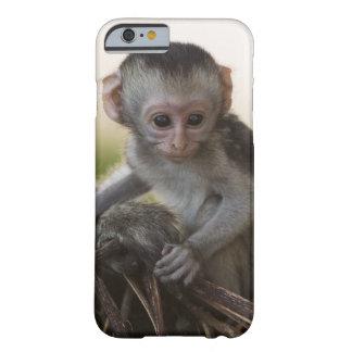 Kenya, Samburu Game Reserve. Vervet Monkey Barely There iPhone 6 Case