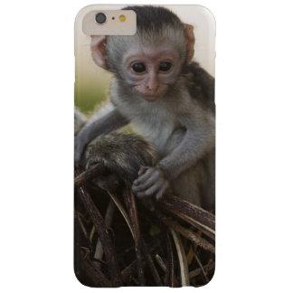 Kenya, Samburu Game Reserve. Vervet Monkey Barely There iPhone 6 Plus Case