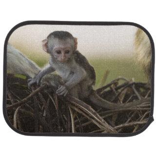 Kenya, Samburu Game Reserve. Vervet Monkey Car Floor Mat