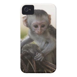 Kenya, Samburu Game Reserve. Vervet Monkey Case-Mate iPhone 4 Case