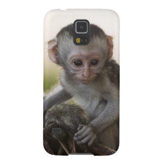 Kenya, Samburu Game Reserve. Vervet Monkey Galaxy S5 Case