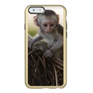 Kenya, Samburu Game Reserve. Vervet Monkey Incipio Feather Shine iPhone 6 Case