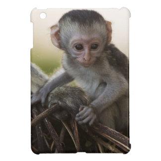 Kenya, Samburu Game Reserve. Vervet Monkey iPad Mini Cover