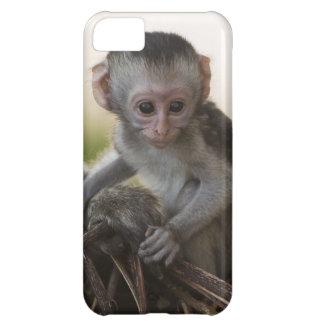 Kenya, Samburu Game Reserve. Vervet Monkey iPhone 5C Cover