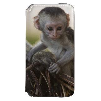 Kenya, Samburu Game Reserve. Vervet Monkey iPhone 6/6s Wallet Case