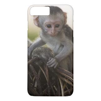 Kenya, Samburu Game Reserve. Vervet Monkey iPhone 7 Plus Case