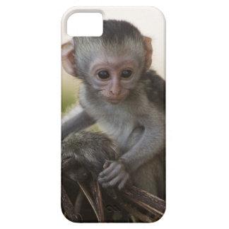 Kenya, Samburu Game Reserve. Vervet Monkey iPhone SE/5/5s Case