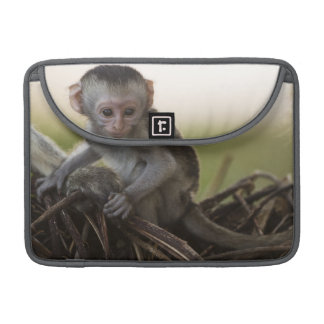 Kenya, Samburu Game Reserve. Vervet Monkey MacBook Pro Sleeve