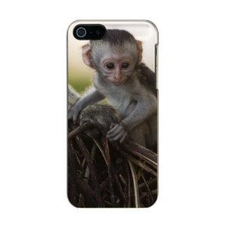 Kenya, Samburu Game Reserve. Vervet Monkey Metallic iPhone SE/5/5s Case